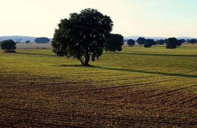 La Mancha 2-tour-wine.web