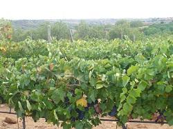 qubel-madrid-wine-tour.web